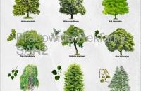 drzewa-małe