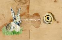 zajac-szarak