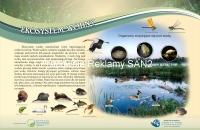 ekosystem-wodny-s