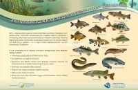 ryby-s