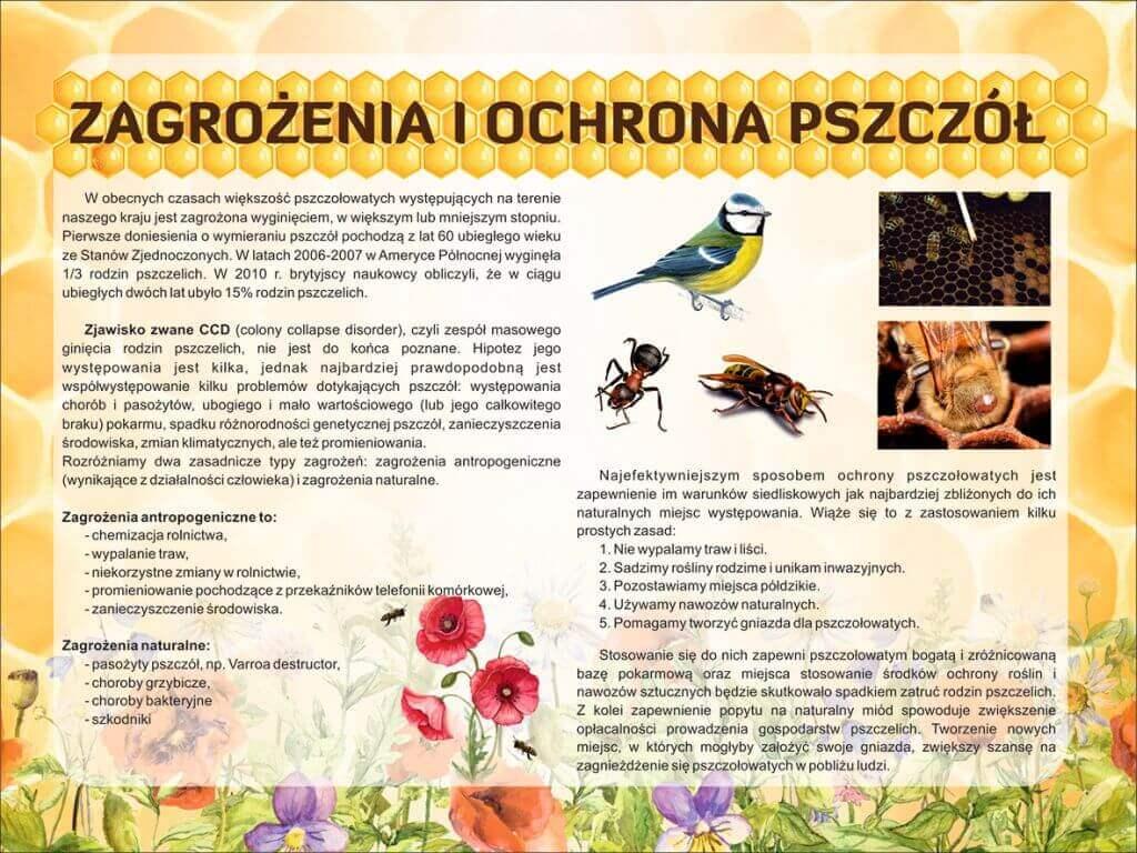 zargozenia pszczół 2019 mała